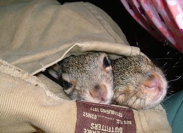 Squirrels in a magic pocket